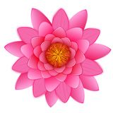 Beautiful pink lotus or waterlily flower isolated. Royalty Free Stock Image