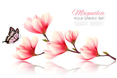 Beautiful pink magnolia background with butterfly. Royalty Free Stock Images