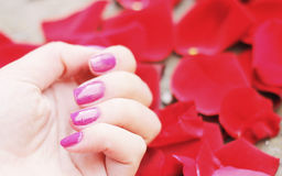 Beautiful pink manicure. Image with beautiful and delicate pink manicure. Manicure and red flowers,rose petals Stock Photos