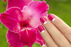 Beautiful pink manicure. Beautiful pink manicure with nail art on the background of gladiolus royalty free stock images