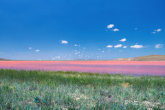 Beautiful pink mud lake. On a sunny day Royalty Free Stock Photography