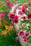 Beautiful pink and orange flowers isolated in sunny day, blue sky, green grass.Flower decoration. Beautiful pink and orange flowers isolated in sunny day, blue stock image