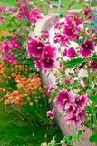 Beautiful pink and orange flowers isolated in sunny day, blue sky, green grass.Flower decoration. Beautiful pink and orange flowers isolated in sunny day, blue royalty free stock images