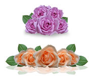 Beautiful pink and orange roses Royalty Free Stock Photo