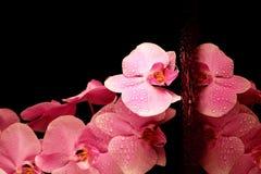 Beautiful pink orchid Stock Photos