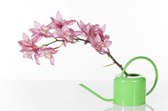 Beautiful pink orchid Stock Photos