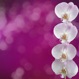 Beautiful pink orchid branch Stock Image