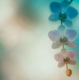 Beautiful pink orchid branch on an abstract background Royalty Free Stock Image