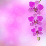 Beautiful pink orchid branch with a branch of pink orchids Stock Photography