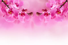 Beautiful pink orchid flower. Spring and summer romantic concept Stock Images