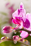 Beautiful pink orchid flower Stock Photos
