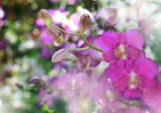Beautiful pink orchid flower bouquet with blurry background Royalty Free Stock Photo
