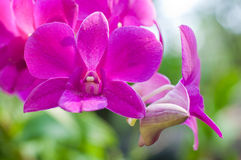 The beautiful pink orchid flower Stock Photos