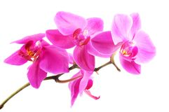 Beautiful pink orchid  flowers Stock Images