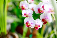 Beautiful pink orchid flowers on natural background Royalty Free Stock Images