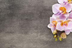 Beautiful pink orchid on a gray background. Royalty Free Stock Images