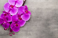 Beautiful pink orchid on a gray background. Stock Photo