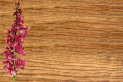 Beautiful pink orchid over wooden texture Royalty Free Stock Photo