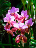 Beautiful pink orchid, phalaenopsis. Selective focus, toned Royalty Free Stock Photo