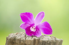 Beautiful pink orchid on a tree stump in the nature. Beautiful pink orchid on a tree stump in the midst of nature stock photo