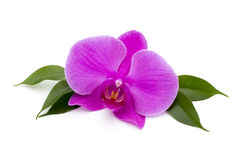 Beautiful pink orchid on the white background. Stock Photo