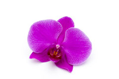 Beautiful pink orchid on the white background. Royalty Free Stock Photos