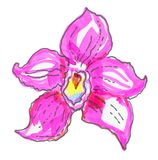 Beautiful pink orchid on white background. Stock Photo