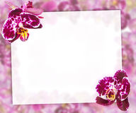 Beautiful Pink Orchids Border for Greeting Card or Lovely Flower Frame Stock Image