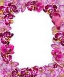 Beautiful Pink Orchids Border for Greeting Card or Lovely Flower Frame Royalty Free Stock Image