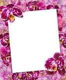 Beautiful Pink Orchids Border for Greeting Card or Lovely Flower Frame Stock Images