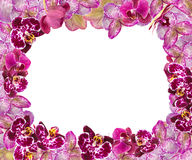 Beautiful Pink Orchids Border for Greeting Card or Lovely Flower Frame Royalty Free Stock Images
