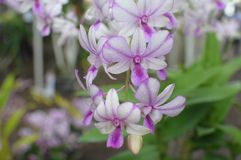 Beautiful pink orchids Stock Photo