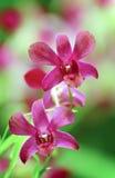 Beautiful pink orchids stock photos