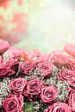 Beautiful pink pale roses background. Royalty Free Stock Photo