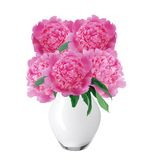 Beautiful pink peonies in glass vase with bow isolated on white Royalty Free Stock Photography