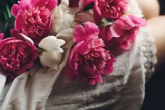 Beautiful pink peonies on legs of boho girl in white bohemian dress. space for text. stylish hipster woman sitting with flowers in. Moody morning. atmospheric royalty free stock photos