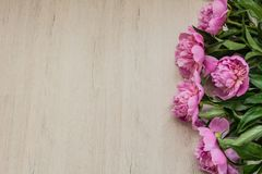 Beautiful pink peonies background for Mother`s Day. Beautiful pink peonies for Mother`s Day Stock Images