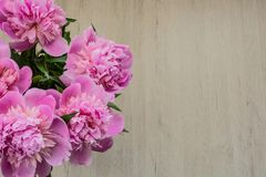 Beautiful pink peonies background for Mother`s Day. Beautiful pink peonies for Mother`s Day Stock Photos