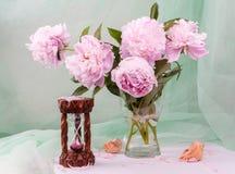 Beautiful pink peonies Royalty Free Stock Photo