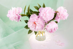 Beautiful pink peonies Royalty Free Stock Photos