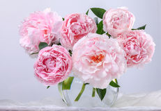 Beautiful pink peonies Royalty Free Stock Photography