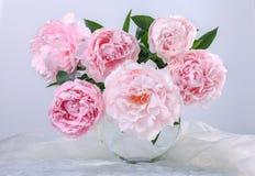 Beautiful pink peonies Stock Photography