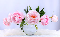 Beautiful pink peonies Royalty Free Stock Images