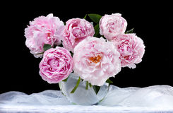 Beautiful pink peonies Stock Photo