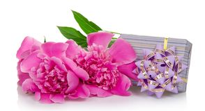 Beautiful pink peonies and the striped gift box Royalty Free Stock Photos