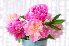 Beautiful pink peony bouquet in vase Stock Photography