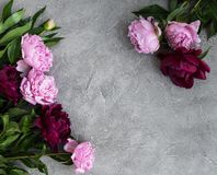 Beautiful pink peony flowers. On a stone background Royalty Free Stock Images
