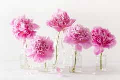 Beautiful pink peony flowers bouquet in vase royalty free stock images