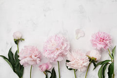 Beautiful pink peony flowers on white stone table with copy space for your text top view and flat lay style. Beautiful pink peony flowers on white stone table royalty free stock image