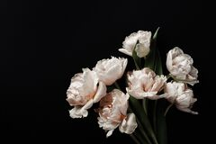 Free Beautiful Pink Peony Tulip Flowers On Black Background. Vintage Floral Composition Stock Image - 173680581